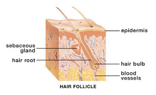 Hair Follicle - Change Your Hair Growth with Hypnosis